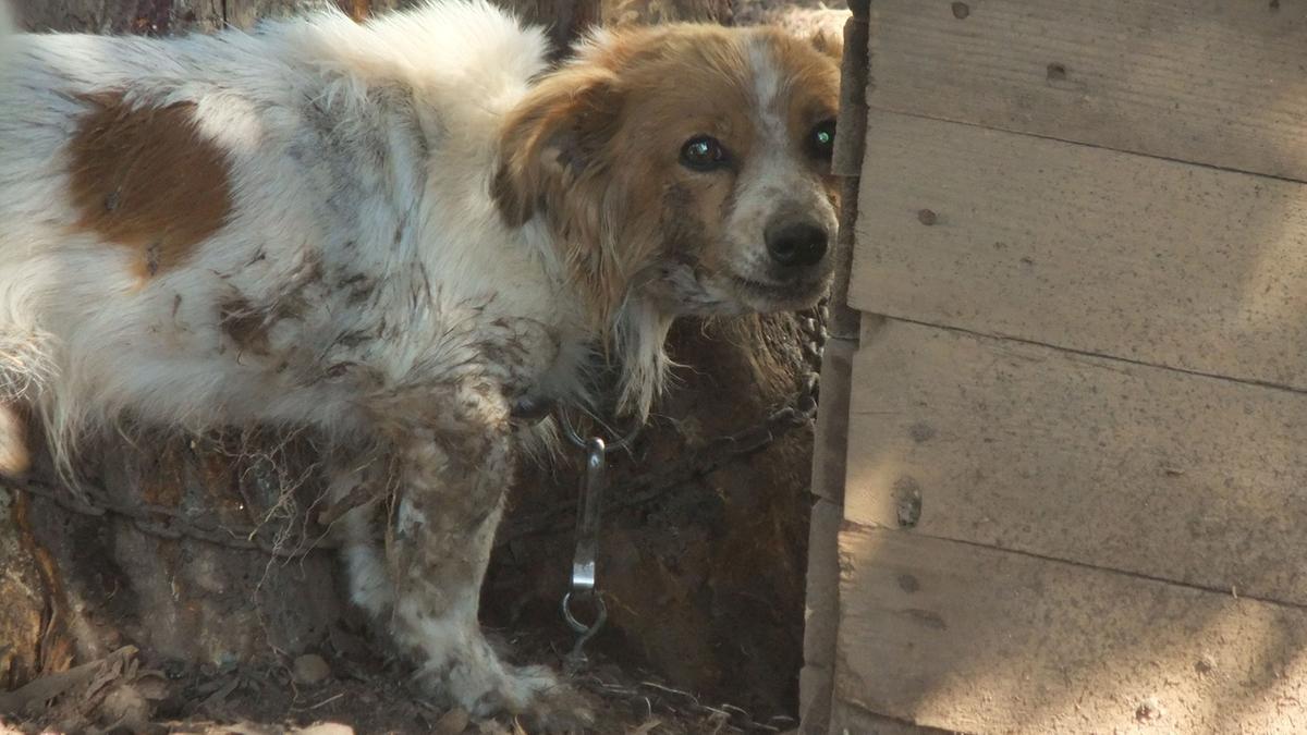 Va in vacanza e abbandona i cani in giardino garda - Spazio giardino ghedi ...
