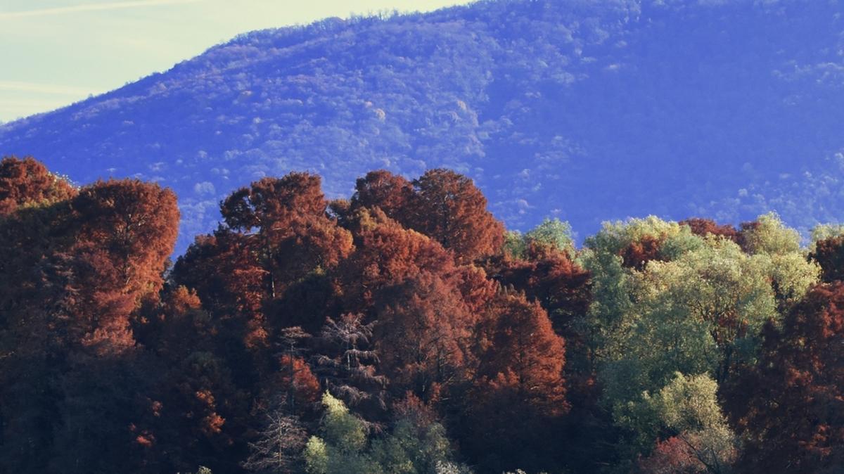 Paratico ha inventato la citt giardino 4 0 sebino - Spazio giardino ghedi ...